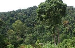 Gia Lai không trồng rừng phòng hộ vì thiếu kinh phí