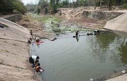 Quảng Trị: Hồ chứa cạn kiệt, thiếu nước phục vụ sản xuất vụ Hè Thu