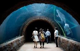 River Safari: Thủy cung nước ngọt lớn nhất thế giới