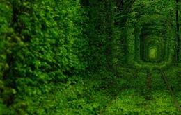 Ngắm những con đường thần tiên nhất thế giới