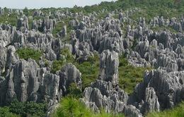 Rừng đá độc nhất vô nhị ở Thạch Lâm, Trung Quốc