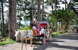 Thú vị câu chuyện ngựa làm du lịch ở Đà Lạt