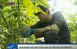 Nông nghiệp Nhật Bản đối diện nguy cơ thiếu hụt lao động trẻ