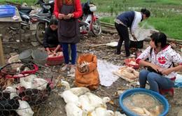 Dồn sức ngăn chặn H7N9 tại các tỉnh biên giới phía Bắc