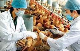 Phê duyệt kế hoạch phòng chống dịch cúm gia cầm