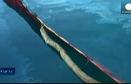 Phát triển vi khuẩn làm sạch dầu tràn trên biển