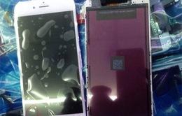 iPhone màn hình 5,5 inch sẽ có tên iPhone 6L?