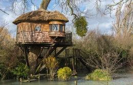 9 ngôi nhà trên cây độc đáo