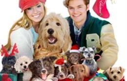 """Phim nước ngoài lên sóng Tết âm lịch: """"12 chú chó đêm Giáng sinh"""""""
