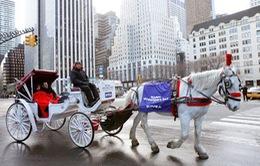 Thú vị dạo công viên lớn nhất New York bằng xe ngựa