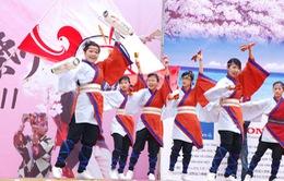 Chờ đón Lễ hội hoa anh đào 2014 tại Hà Nội