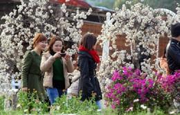 Vườn đào Nhật Tân nhộn nhịp người du Xuân