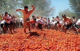 Độc đáo lễ hội cà chua ở Quillon, Chile