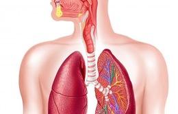 Nghiêm túc trong phòng và điều trị bệnh viêm phổi
