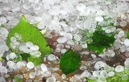 Mưa đá kèm giông lốc tại Thanh Hóa và Sơn La