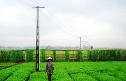 Quảng Nam: Kéo điện ra đồng làm thủy lợi hóa