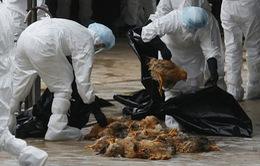 Xuất hiện ca tử vong do cúm A/H5N1 tại Đồng Tháp