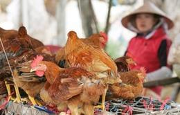 Nguy cơ lớn cúm A/H7N9 xâm nhập vào Việt Nam