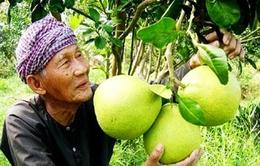 Nông dân Tiền Giang phấn khởi vì trái cây được giá