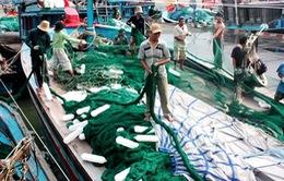 Nỗ lực giúp ngư dân Quảng Nam bám biển