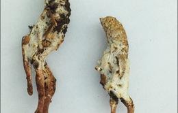 Cảnh báo tình trạng ngộ độc do ăn côn trùng