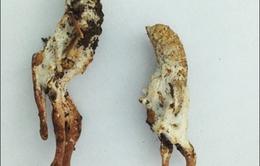 Xử lý nhanh ngộ độc do ăn côn trùng