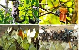 Rút hồ sơ đề cử Vườn quốc gia Cát Tiên  là Di sản thế giới