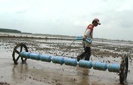 Vụ Thu Đông: Vẫn câu hỏi trồng giống lúa gì?