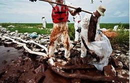 Hậu quả khủng khiếp từ thảm họa tràn dầu vịnh Mexico