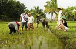 Du lịch homestay ở đảo Lý Sơn: Rào cản tâm linh
