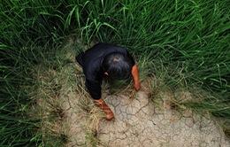 Trung Quốc: Hạn hán nghiêm trọng tại miền Trung