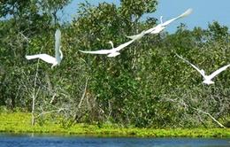 Vườn quốc gia U Minh Thượng trở thành vườn di sản ASEAN