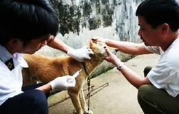Công điện khẩn về phòng chống bệnh dại trên động vật
