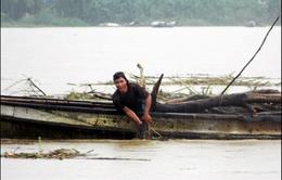 Cảnh báo nguy hiểm vớt gỗ củi trên sông mùa lũ