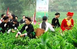 Festival Trà Thái Nguyên: Nâng tầm giá trị trà Việt
