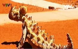 """Hệ động thực vật quý hiếm """"chưa từng có"""" tại Trung tâm đỏ, Australia"""