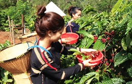 Đẩy mạnh phát triển du lịch tuyến Buôn Ma Thuột - Đà Lạt