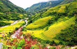 Ruộng bậc thang Sa Pa lọt top 11 ruộng bậc thang đẹp nhất thế giới