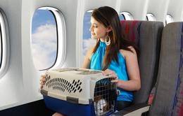 Tư vấn cách đi du lịch với thú cưng