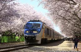 Du lịch Seoul theo mùa (Phần 3)