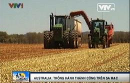 Australia: Trồng hành tây trên... sa mạc