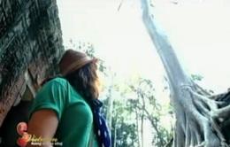 Một ngày thăm quan quần thể đền đài Angkor