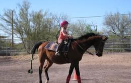 Thú chơi ngựa tại Vương quốc Bỉ
