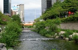 Chuyện về suối Cheonggyecheon ở Seoul, Hàn Quốc