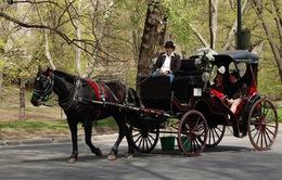 Dịch vụ xe ngựa tại công viên lớn nhất New York