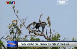 Chiêm ngưỡng các loài chim quý trên hồ Tonle Sap