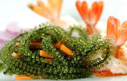 Đặc sản biển Nha Trang - Rong nho biển