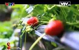 Trổ tài với Salad dâu tây