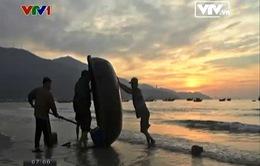 Lặng ngắm bình minh trên biển Việt Nam