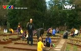 Giới trẻ Mỹ ngày càng rời xa công nghệ, về với ruộng vườn